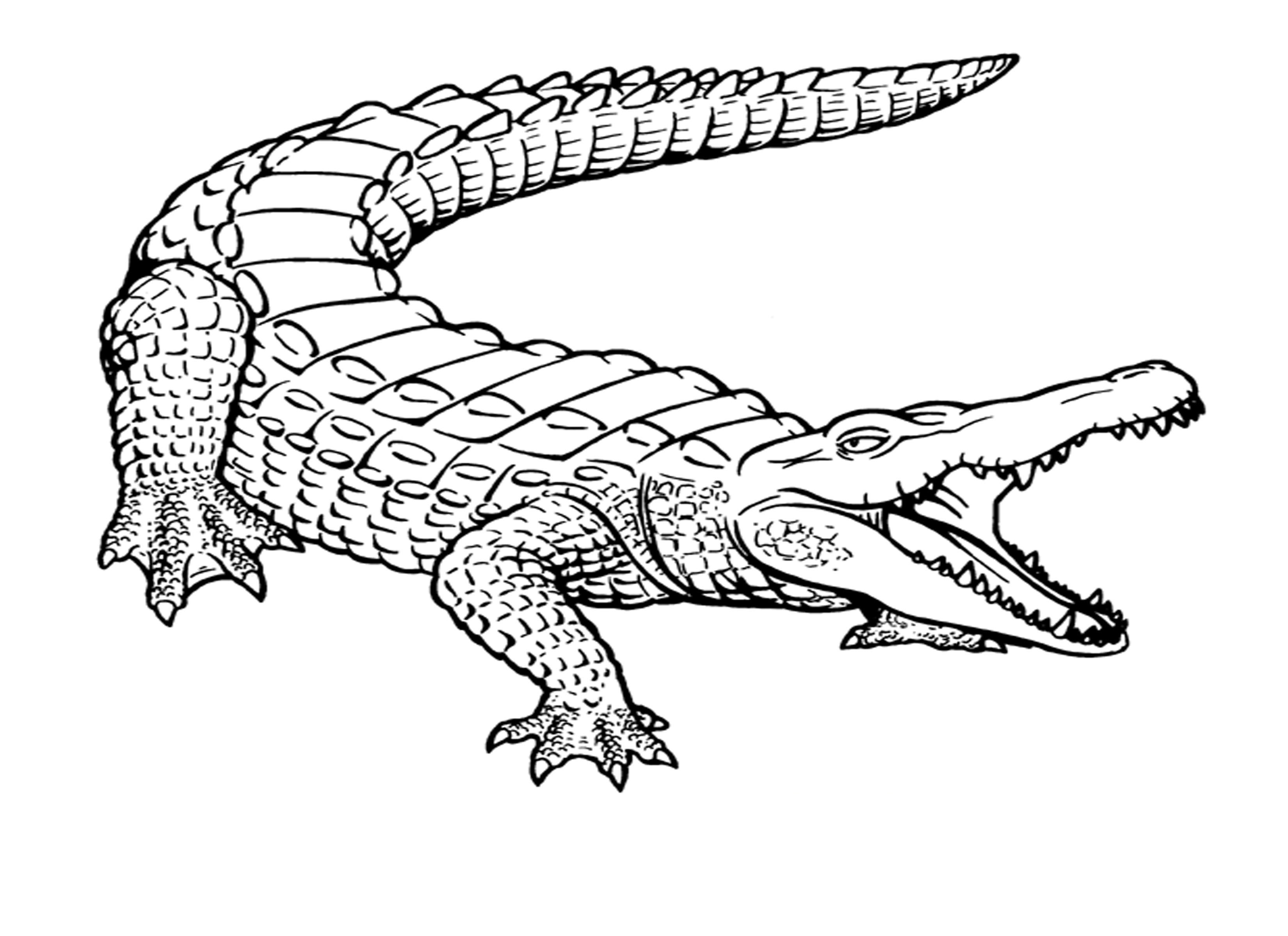 crocodile printable coloring pages