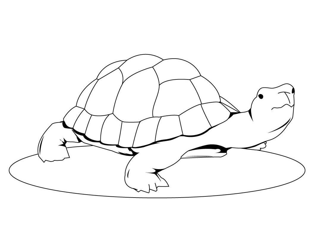cute baby turtle coloring pages cooloring com