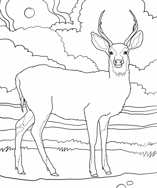 free printable deer coloring pages for kids