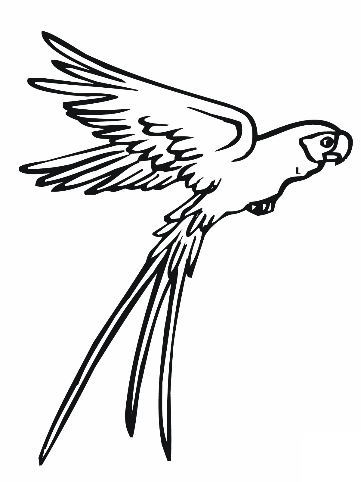 parrot coloring pages 1 parrot coloring pages