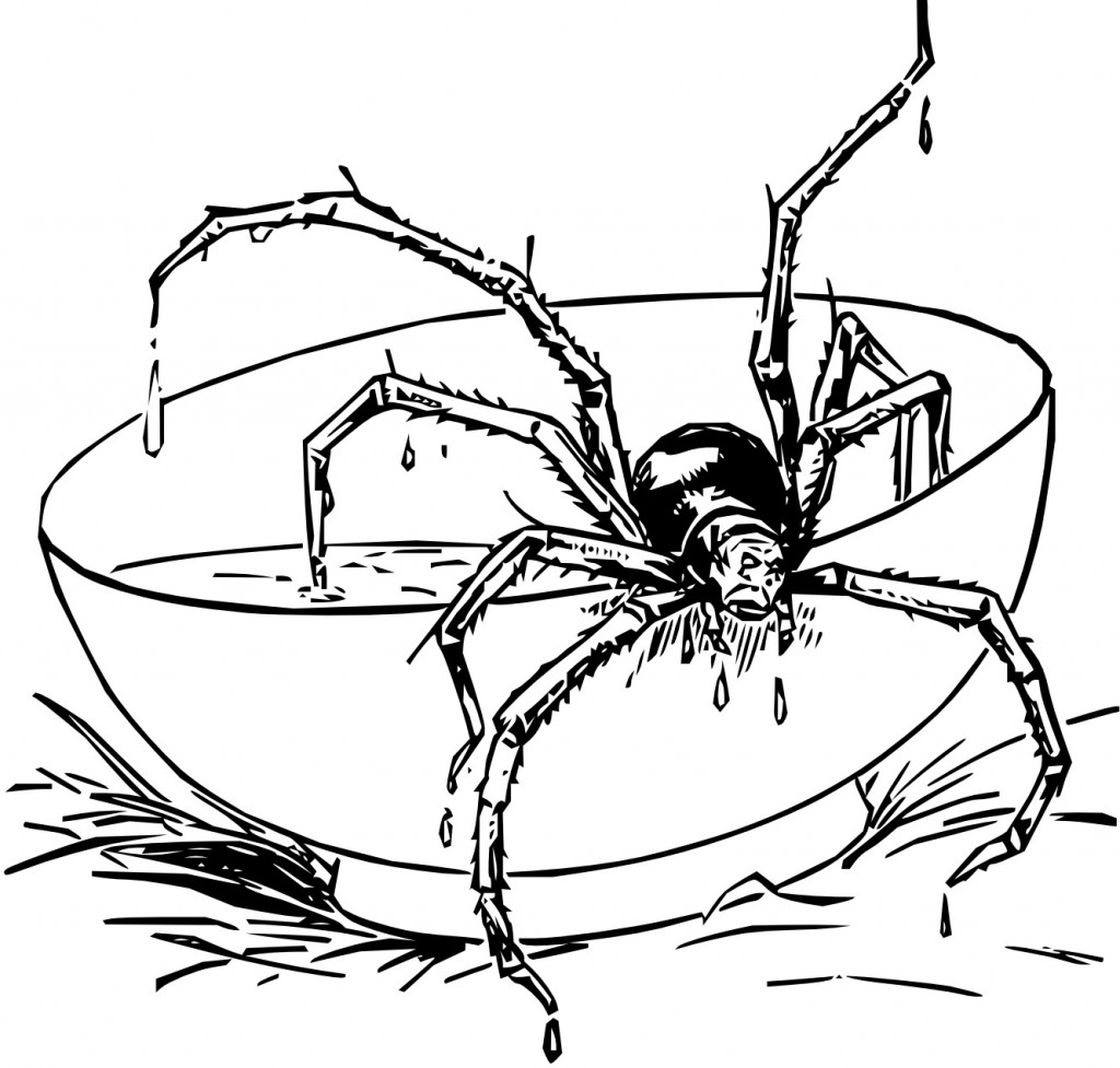 Tarantula Coloring Pages