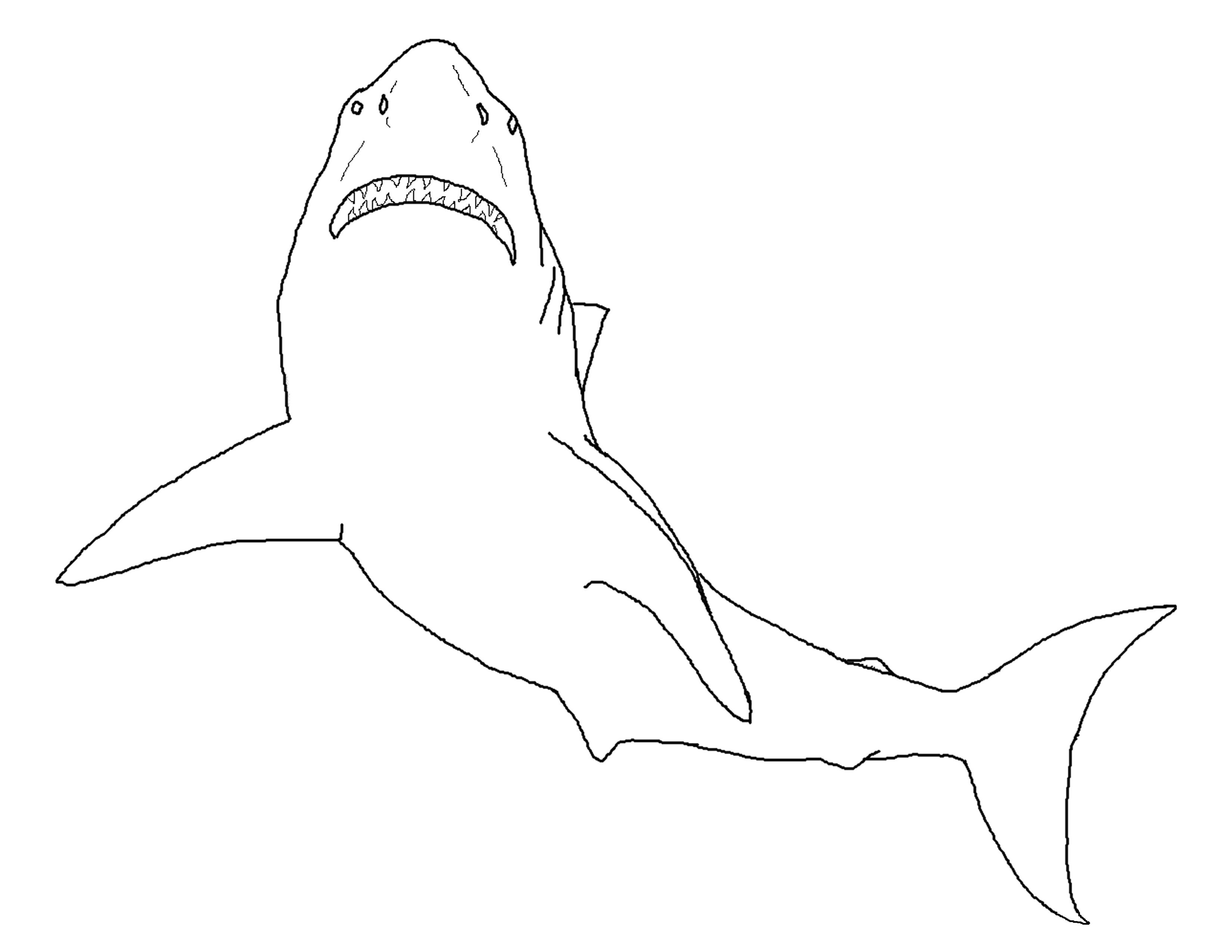 Sand shark | 2550x3300
