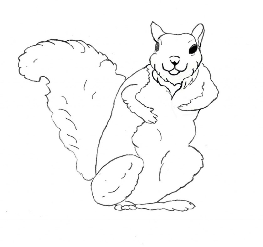 free printable squirrel coloring pages for kids