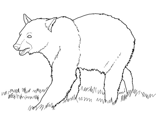 black bear coloring page # 3