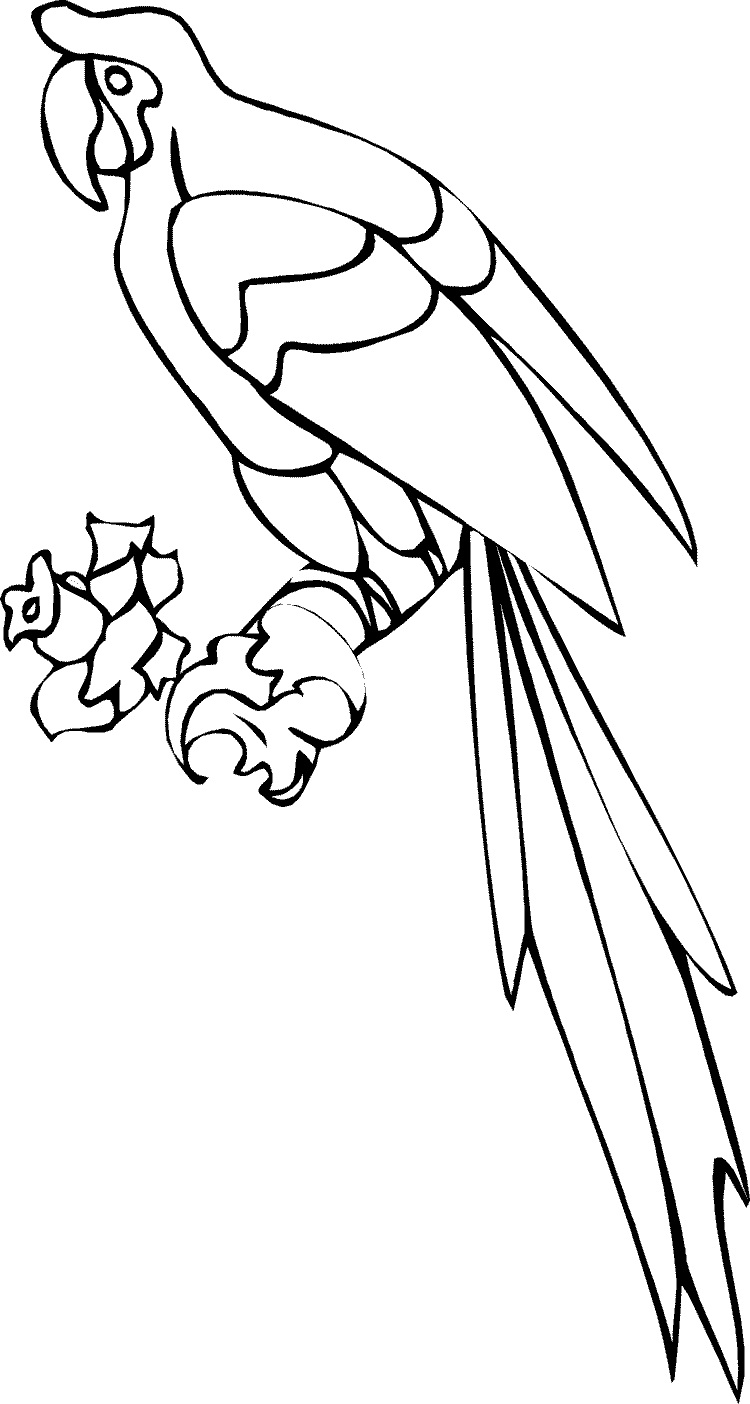 parrot coloring pages photos