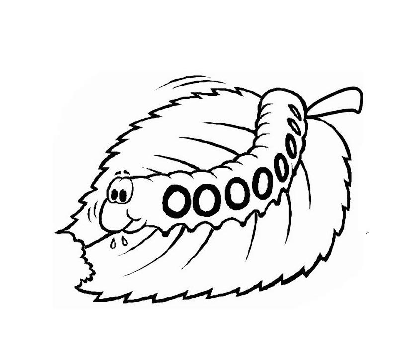 free printable caterpillar coloring pages for kids
