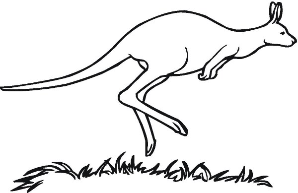 kangaroo coloring pages # 10