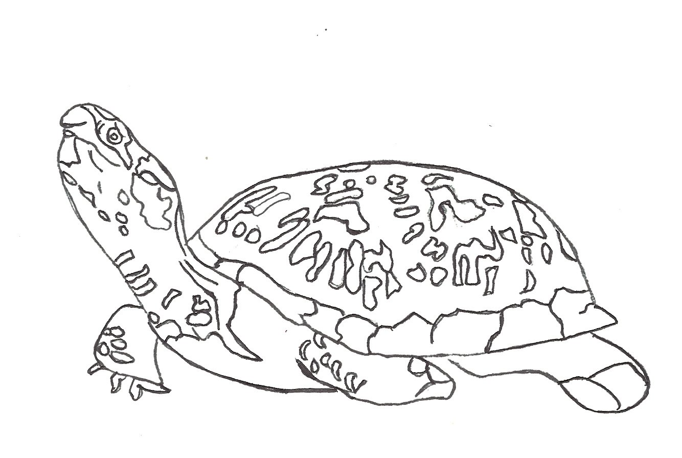 baby sea turtle coloring pages baby sea turtles coloring pages az