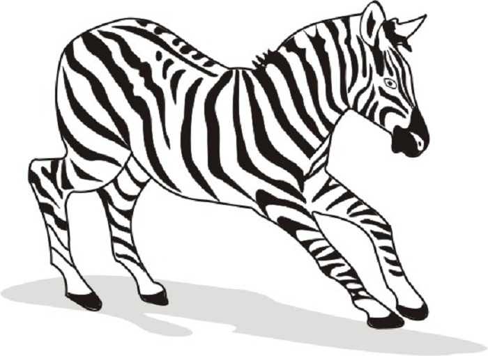 images of zebra coloring pages cooloring com