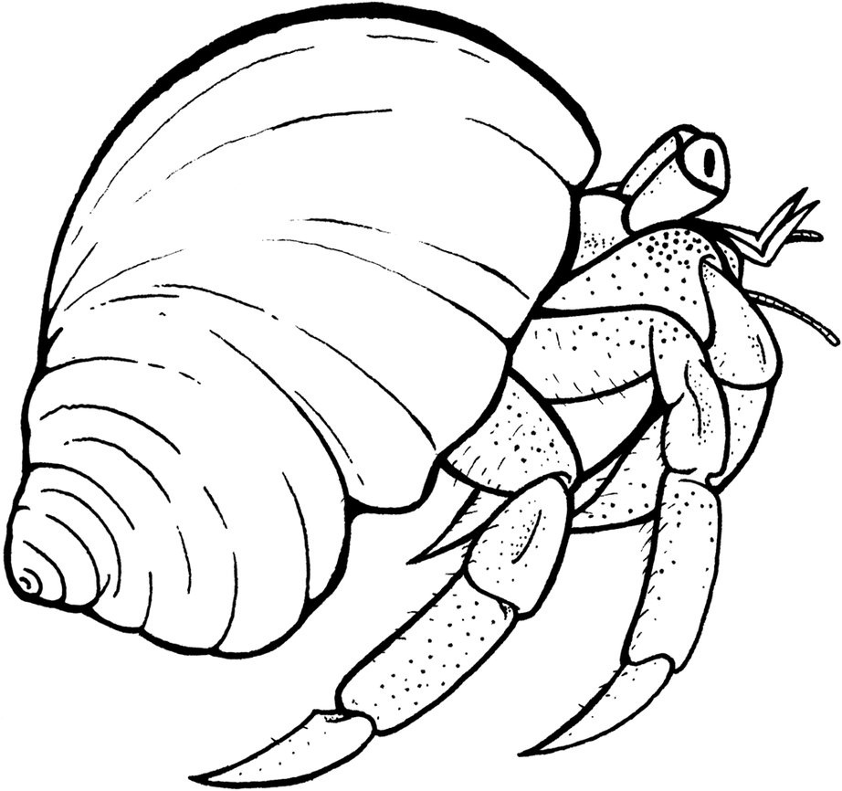 free printable hermit crab pages for kids