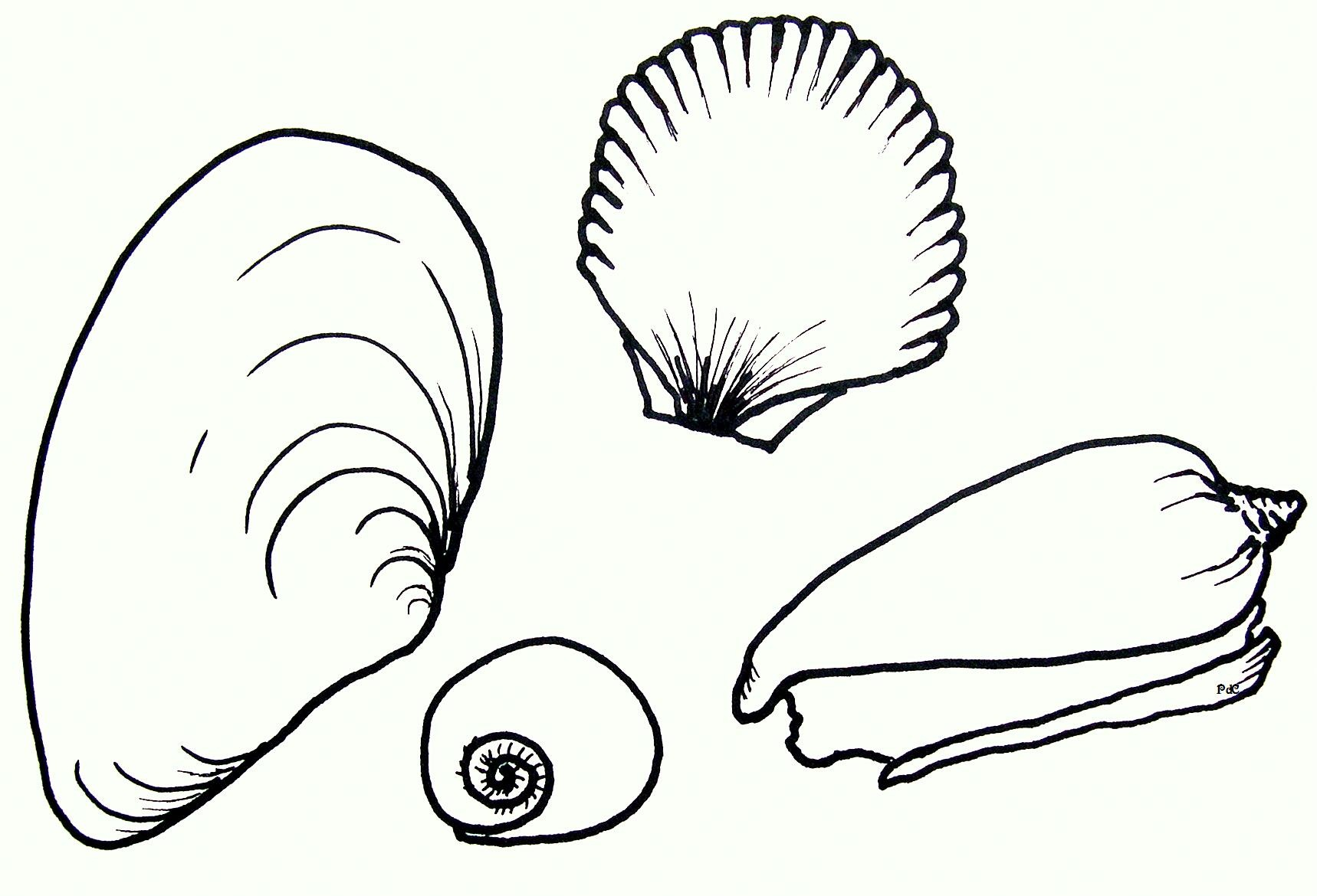 snail coloring page funny shell coloring page sea shell coloring