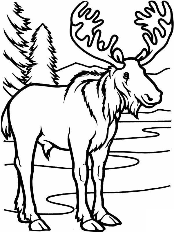 moose coloring page # 1