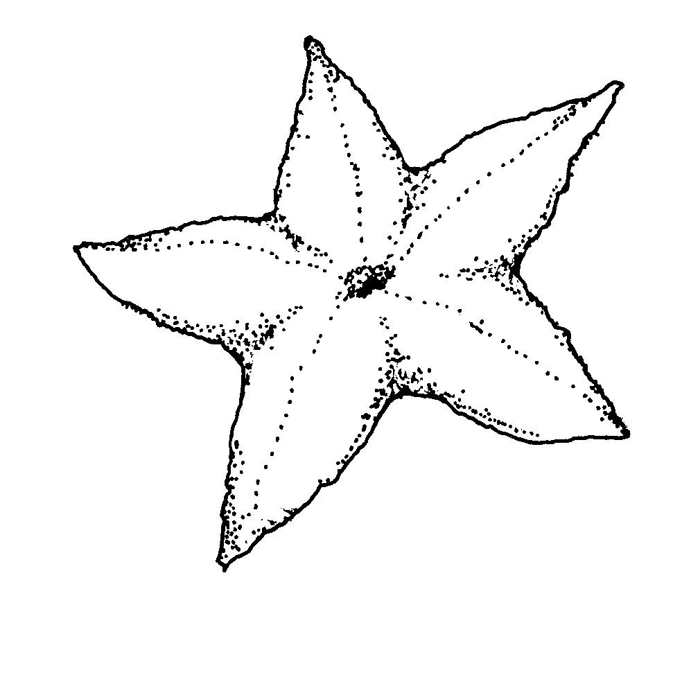 Starfish | Free Printable Templates & Coloring Pages ... | 977x984