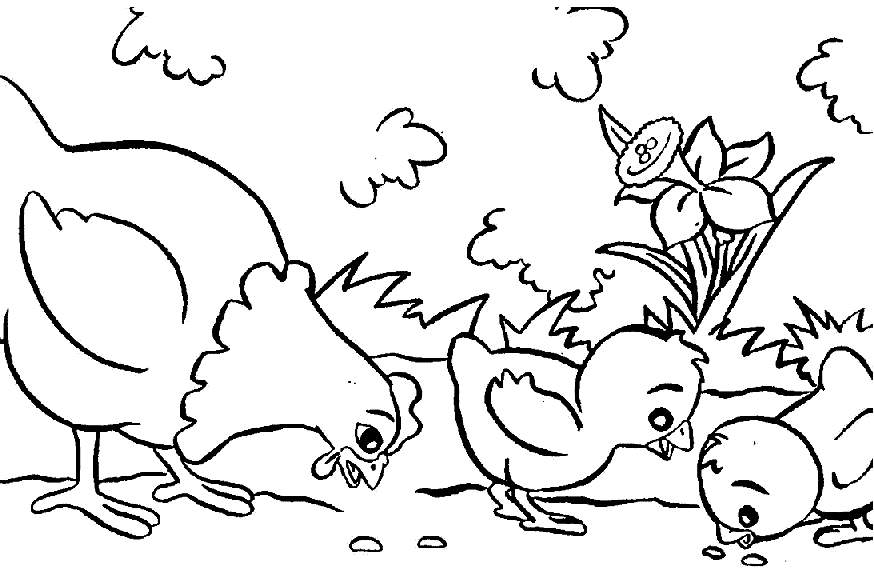 farm animal coloring pages druntk