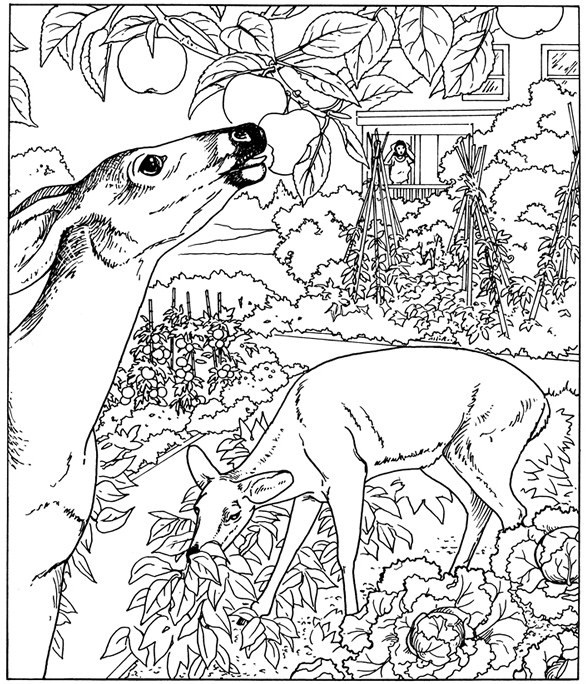nature coloring pages for kids best coloring pages for kids