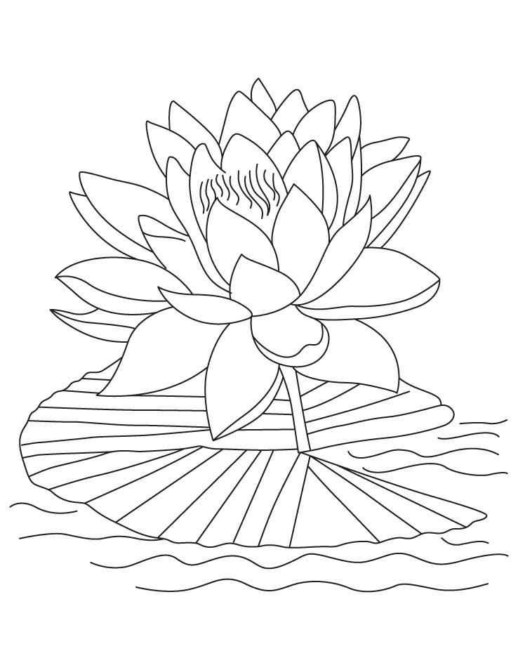advanced coloring pictures of fish in a pond the art jinni