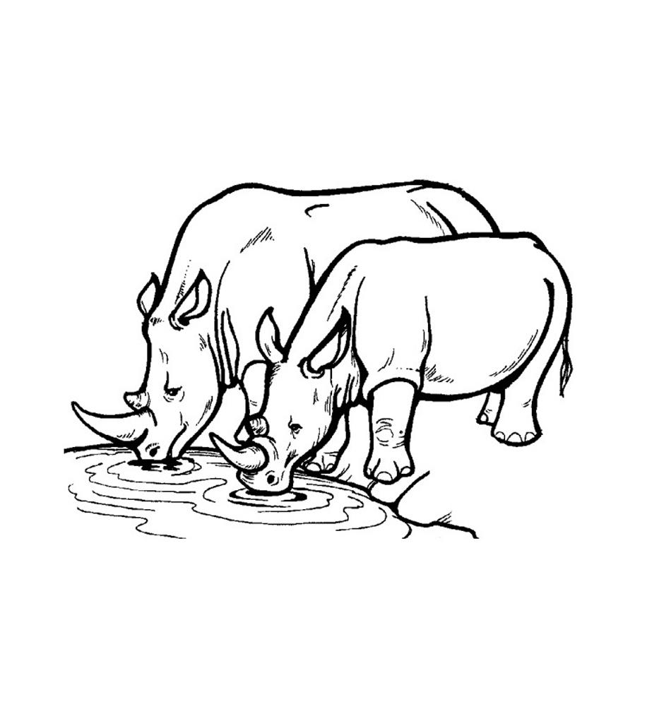 rhinoceros coloring page printable