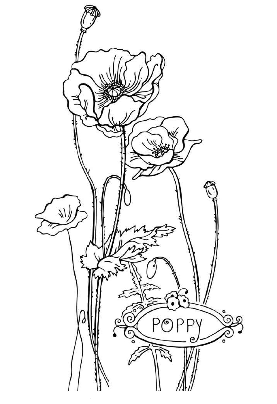 Free Printable Flower Coloring Pages For Kids - Best ... | coloring pages for childrens