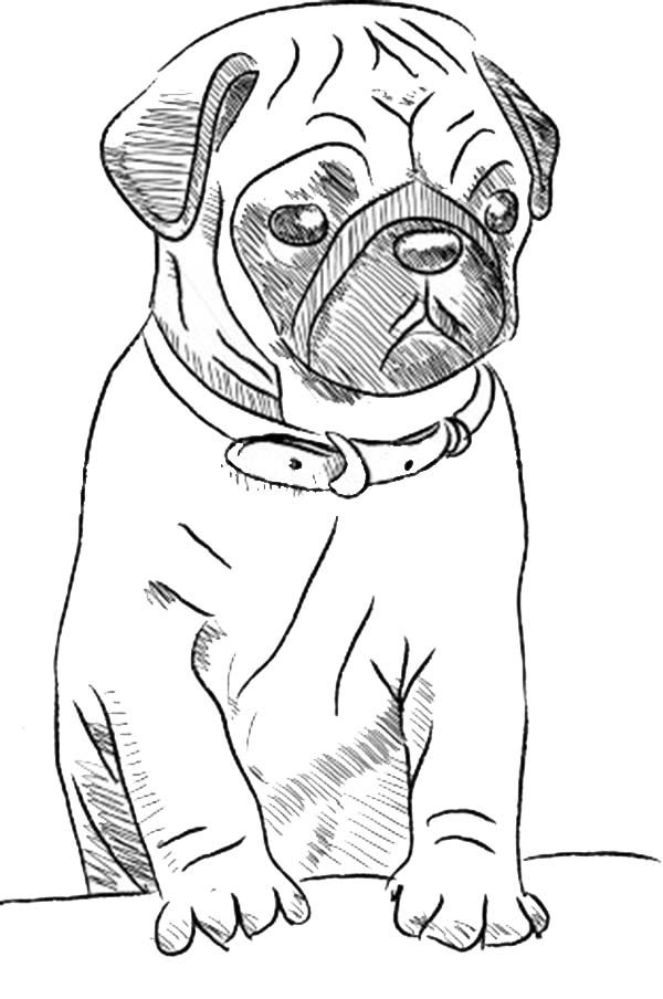 Pug Coloring Pages Best Coloring Pages For Kids