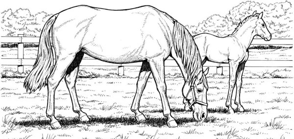 realistic horse coloring pages # 1