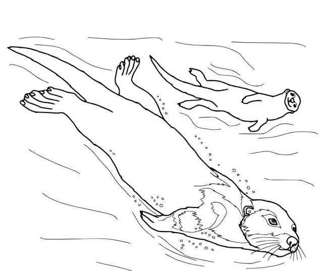 Otter Coloring Pages - Best Coloring Pages For Kids