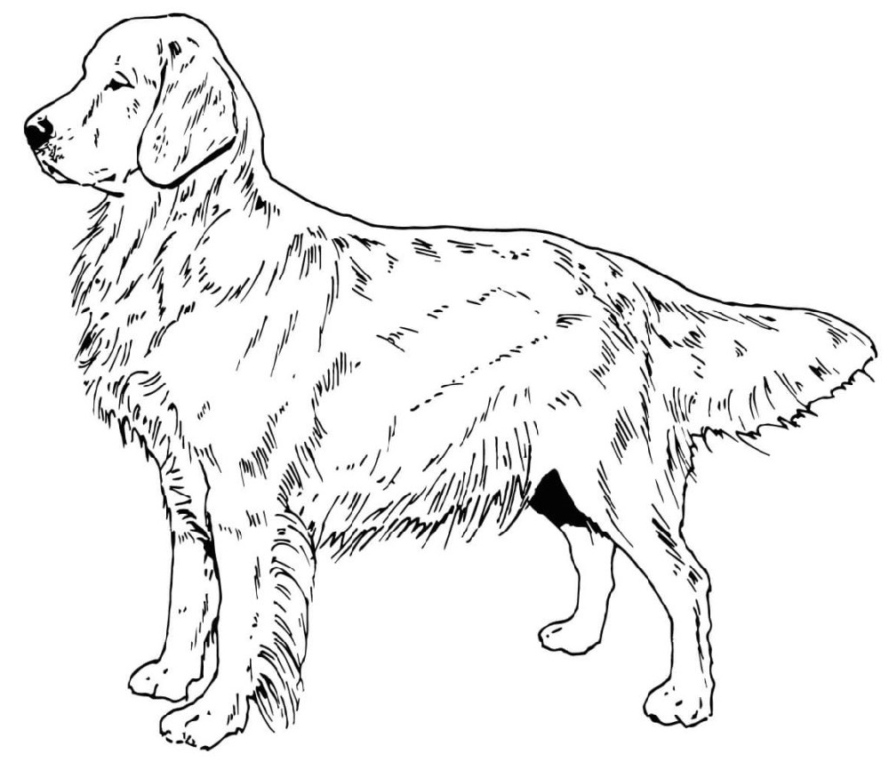 Golden retriever coloring pages best coloring pages kids, i love mom coloring page