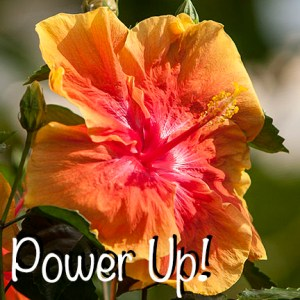 Power Up! ZV7L0490