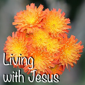 Living with Jesus ZV7L0238_plus 01
