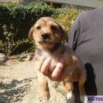 Malia Stray Puppies: Tara
