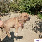 Malia Stray Pups: Tobias