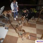 Malia Strays Puppies