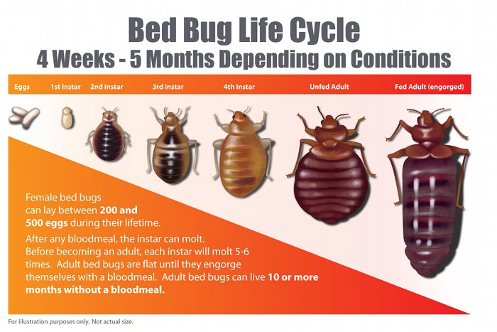 Bed Bugs Country Inn And Suites San Diego