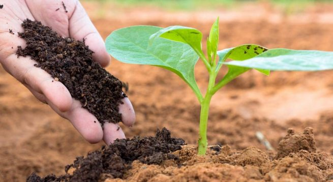How to improve your soil fertility: 12 things to do to have the best soil for growing healthy crops