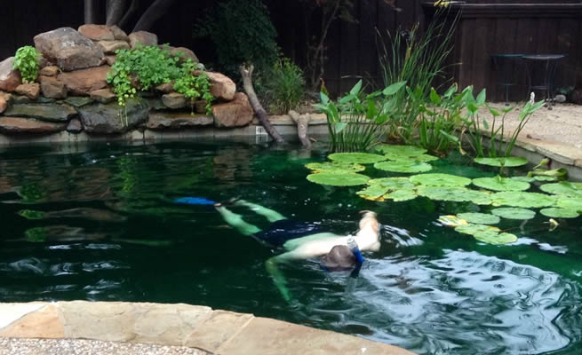 Backyard fish farming: How to turn your old swimming pool into a thriving koi or tilapia fish pond