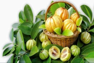 best garcinia cambogia product