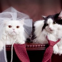 How to Choose Cat Costumes for Your Wedding: The Only Guide You Need