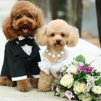 A Beginner's Guide To Dog Costumes for Your Wedding: Everything You Need To Know