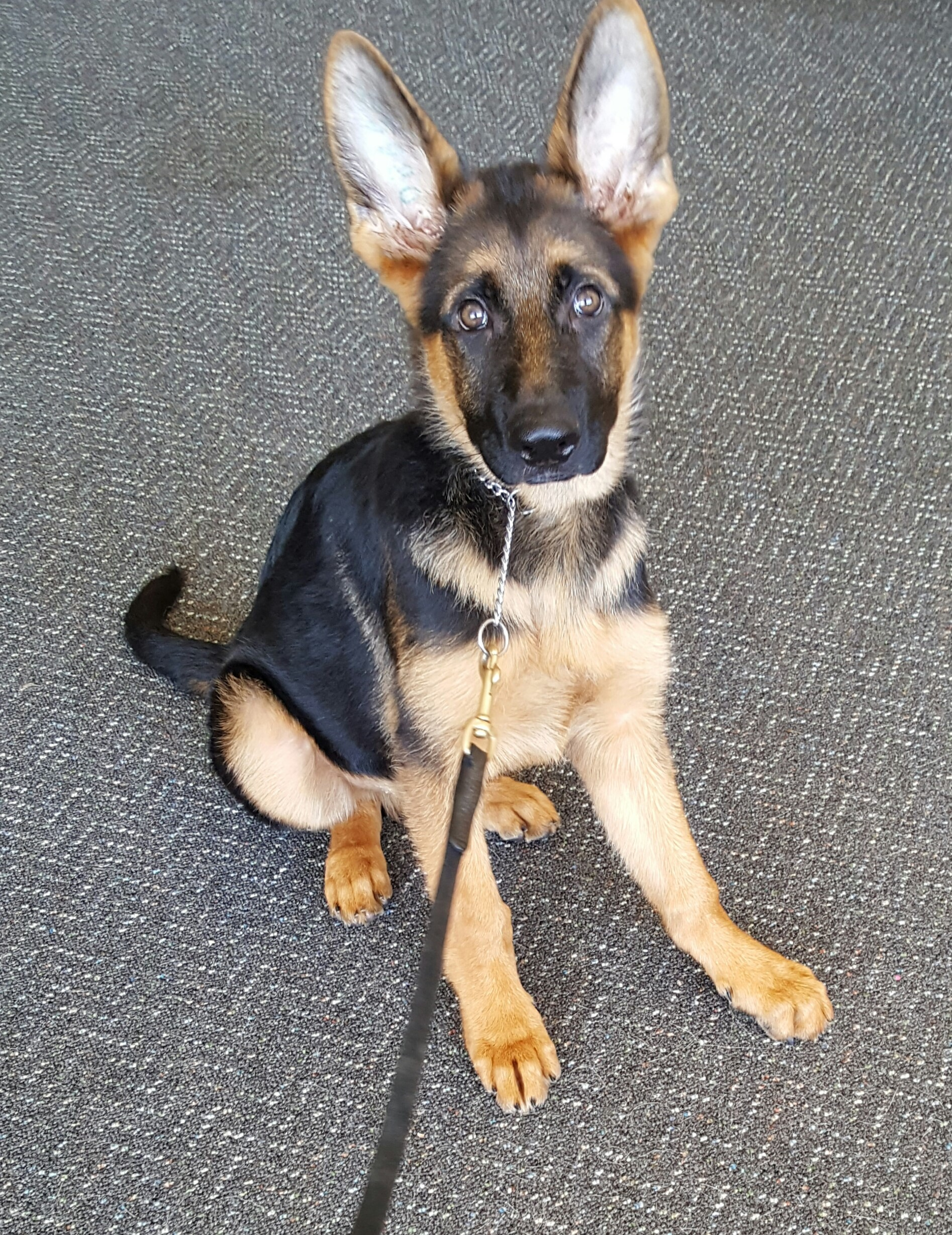 10 Week Old Puppy Training