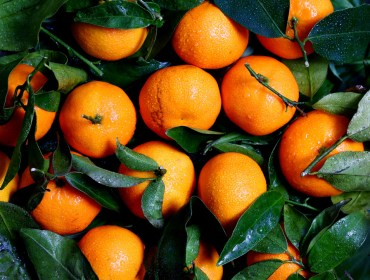 Tangerines for Tangerine Dream Margarita
