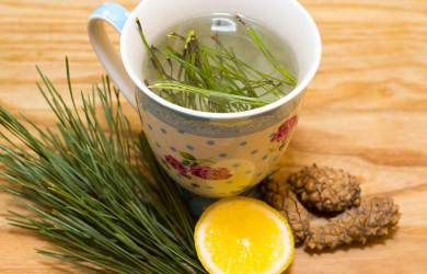 Pine Needle Tea - Cancer-Killer and All-around Health Tonic