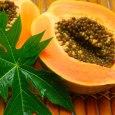 papaya leaf benefits