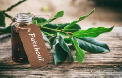 Health Benefits of Patchouli Oil