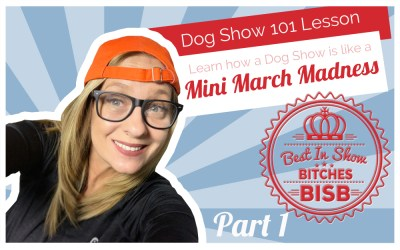 Dog Show – 101 How a Dog Show Works – Episode Ten