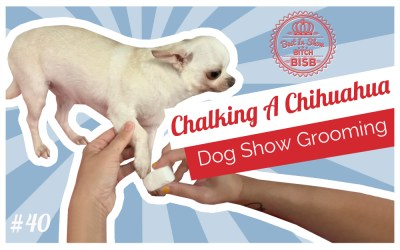Dog Show Grooming – Chalking A Chihuahua
