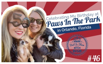 Day In The Life: Celebrating My Birthday at Paws in the Park Orlando VLOG