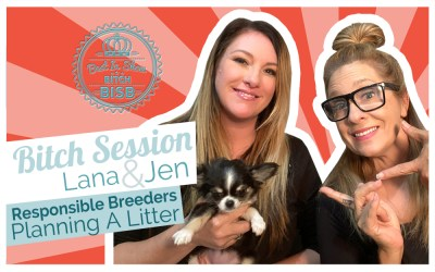 Bitch Session: Responsible Dog Breeders – Planning a Litter