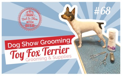 Dog Show Grooming: How To Groom a Toy Fox Terrier and the Supplies You Need