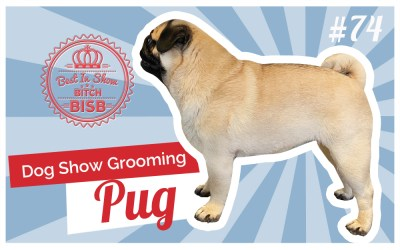 Dog Show Grooming: How To Groom a Pug