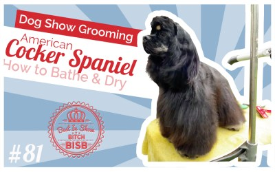 Dog Show Grooming: How to Groom an American Cocker Spaniel – Bath & Blow Dry