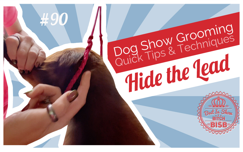 Dog Show Grooming: How to Bury the Collar